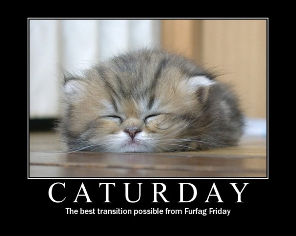 caturday-transition